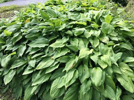 20160814tamplerplants_0394.jpg