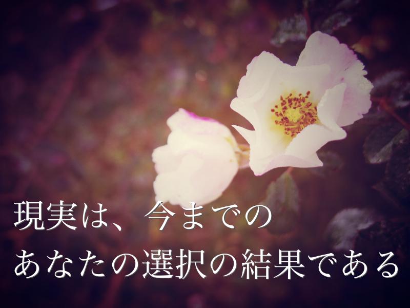 IMGP1496_Fotor.jpg