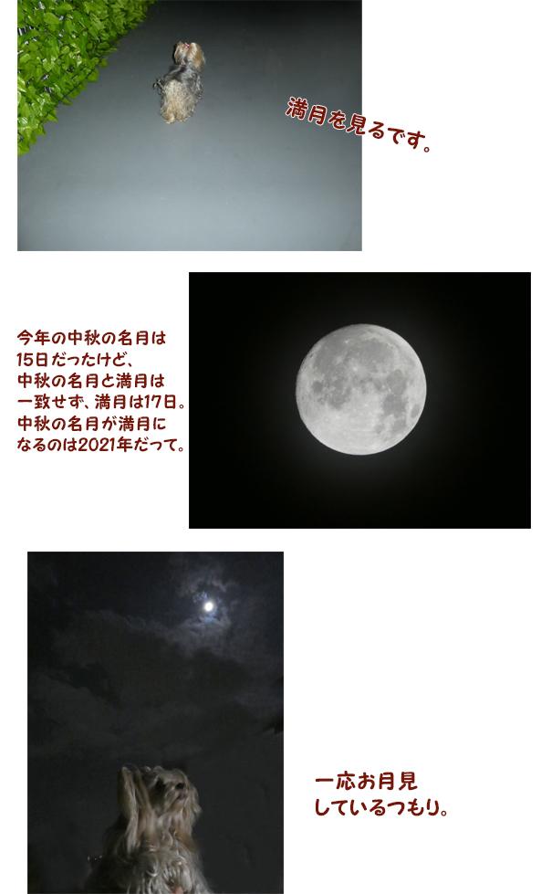 中秋の名月 のコピー