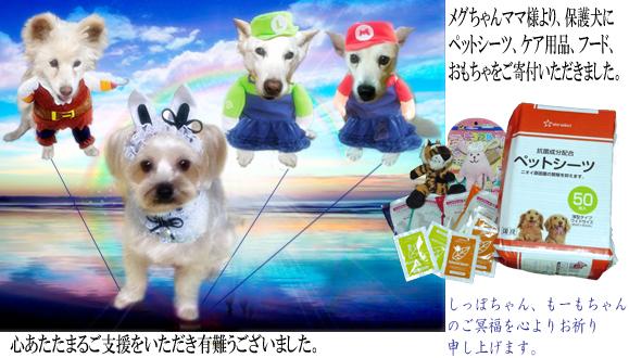 240(2016春)メグちゃん様ご支援報告 のコピー
