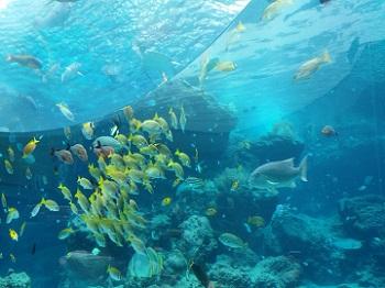 美ら海水族館 魚