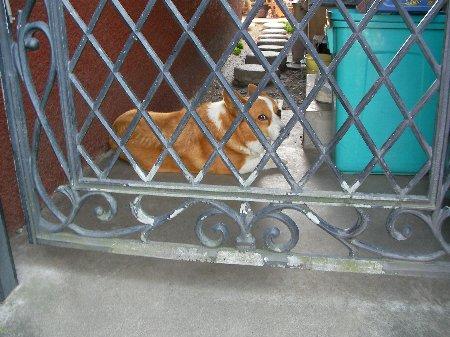 05191612ケーキ屋犬③