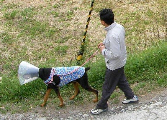 201604130845散歩②