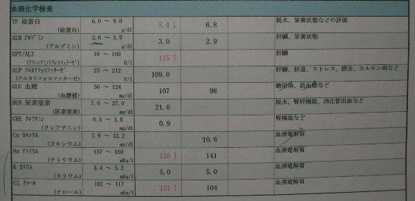 8日、17日血液検査②