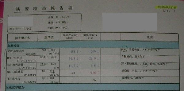 8日、17日血液検査①