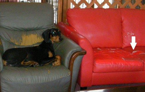 201609111428リンダと赤いソファー