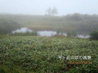 平ヶ岳山頂の池塘