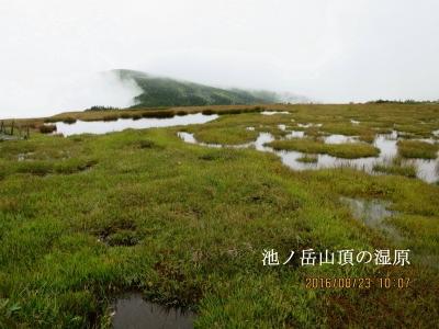 池の岳山頂の池塘