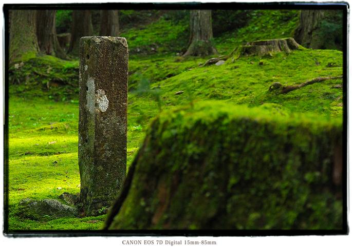 平泉寺白山神社1605gw0223.jpg