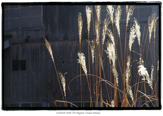 201011sibadatra02.jpg