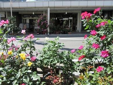 薔薇町商店街