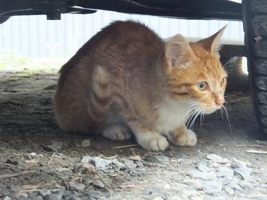 切羽詰まった子猫
