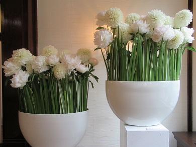 ホールの白い花