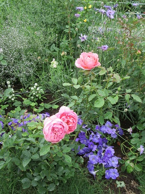 薔薇とコラボ
