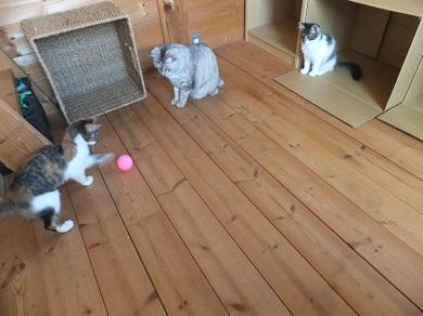 猫部屋で遊ぶ3にゃん