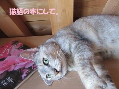 猫語の本にして。