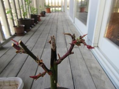 芽が出てる!6月6日