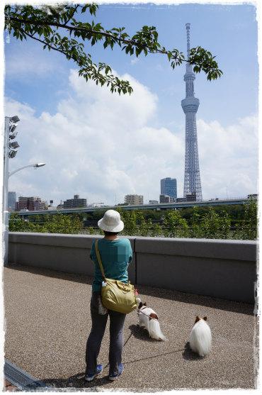 隅田公園6