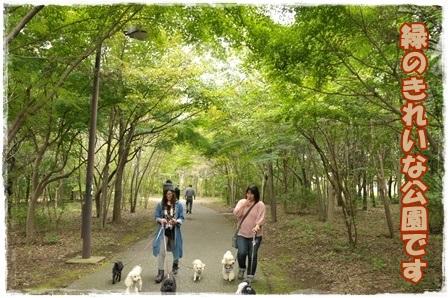 緑のきれいな公園