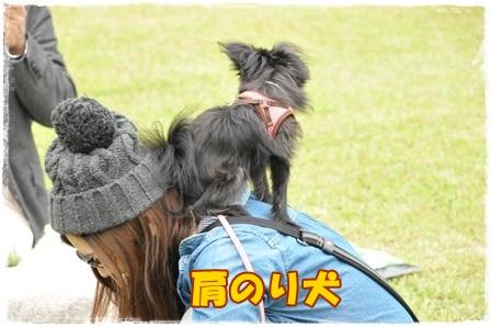 肩のり犬あずき