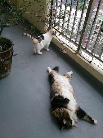 猫1607110004(1)