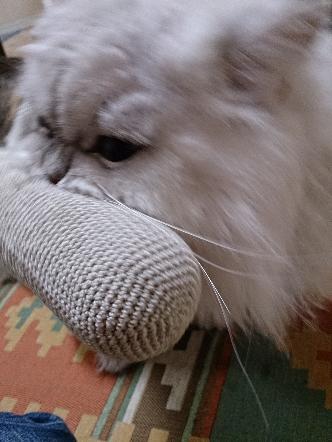 猫1608010002(1)