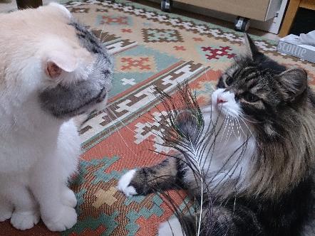 猫1609160004(1)