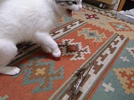 猫1609160005(1)