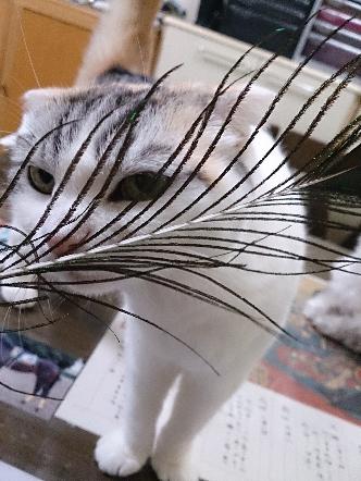 猫1609120001(1)