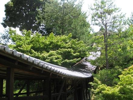 高台寺20160618 (9)