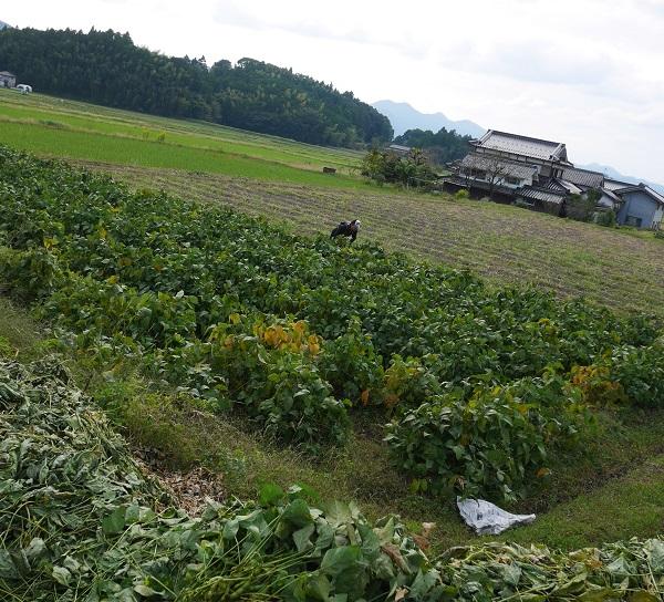 黒枝豆調達ツーリング1610-014b