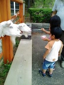 ブログ2 0530動物公園 (5)