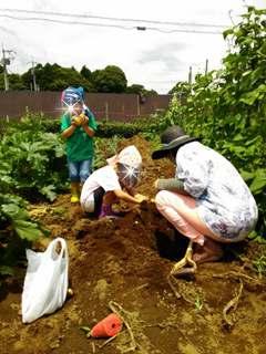 ブログ2 0627収穫 (2)