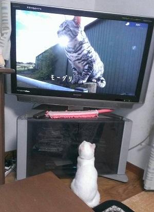 4猫は猫に関心大にゃり