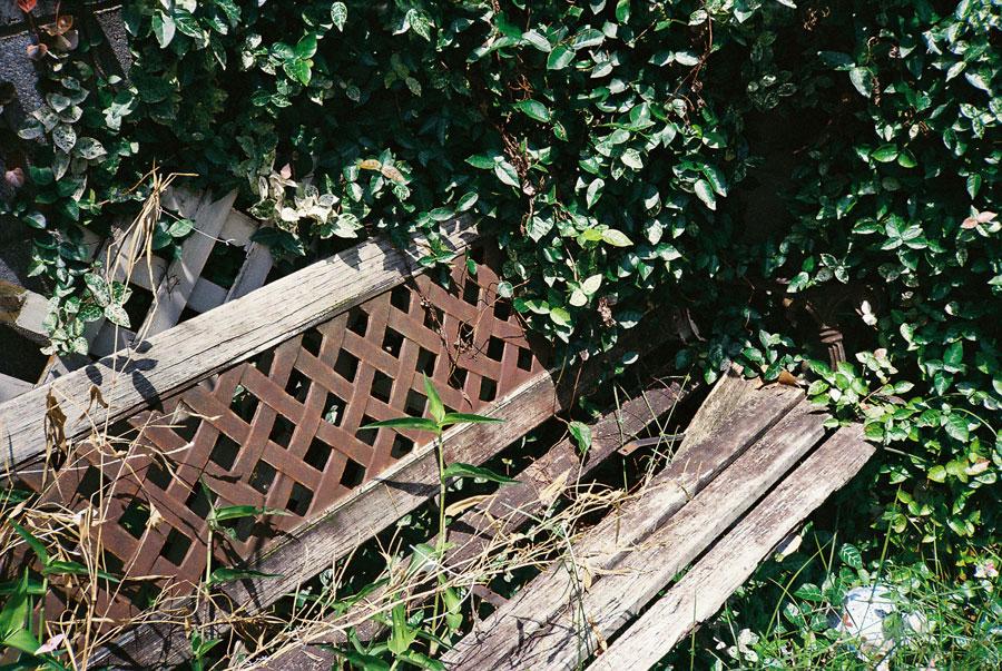 夏草のベンチ
