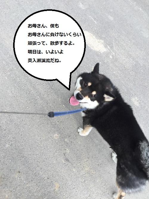 まるちゃん2016092914
