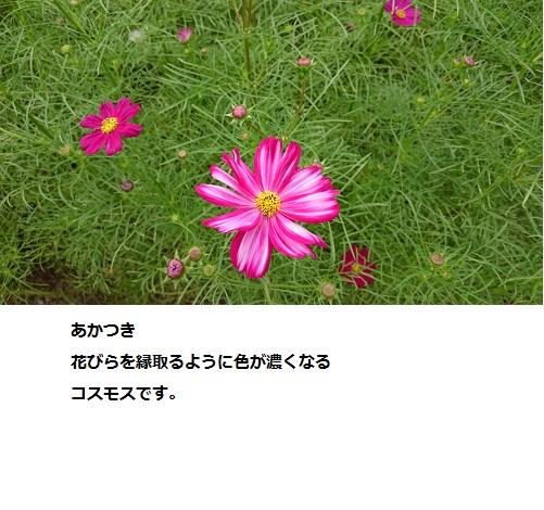 まるちゃん2016101709