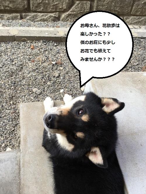 まるちゃん2016102608