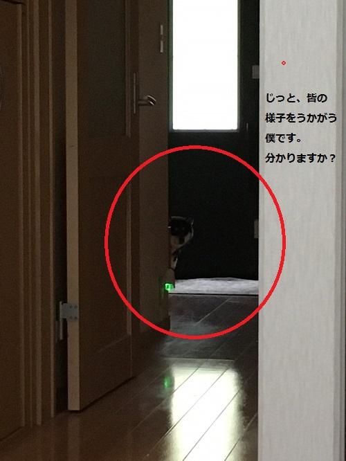 まるちゃん2016102701