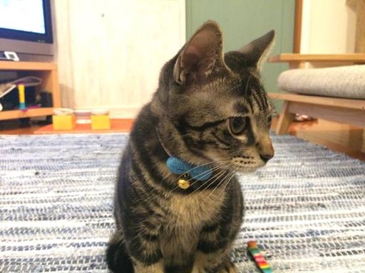 猫の首輪専門店mauha(福岡県T様)お写真