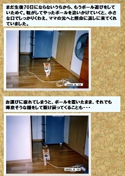 コルクボード ・フェルト犬めぐ3