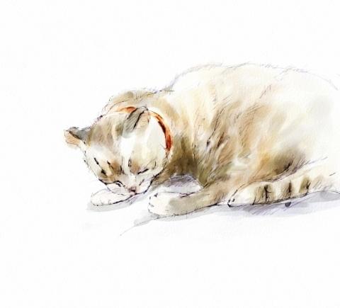 猫2 (2)