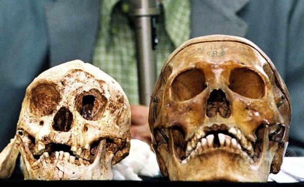 インドネシアで発見されたホモ・フロレシエンシス、通称「ホビット」(左)と現代人の頭蓋骨。インドネシア・ジャワ島中部にあるガジャ・マダ大学で(2004年11月5日撮影、資料写真)。〔AFPBB News〕
