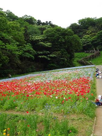 160506花の国6