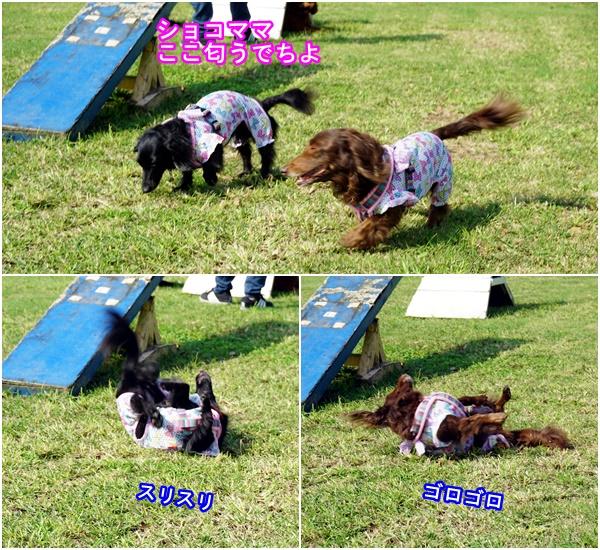 20161002名犬牧場1