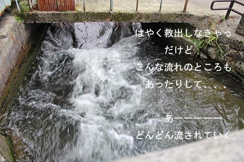 IMG_4029kawa.jpg