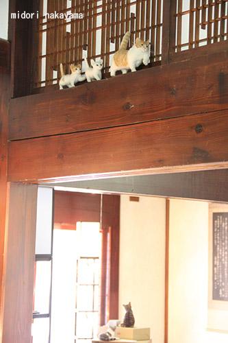 IMG_8069oyakoneko.jpg