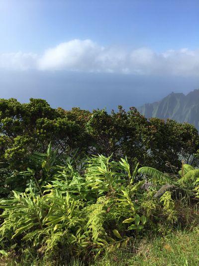 kauai18.jpg