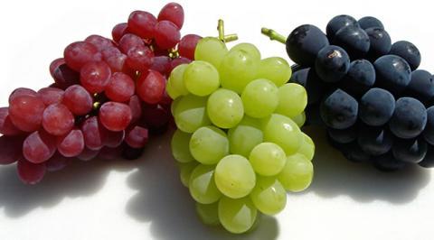 grape40_convert_20160908213033.jpg