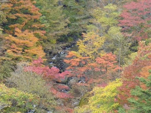 0611王滝の紅葉